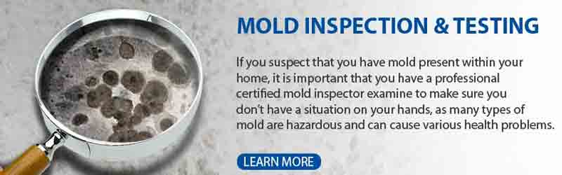 Recognizing Water Damage Mold